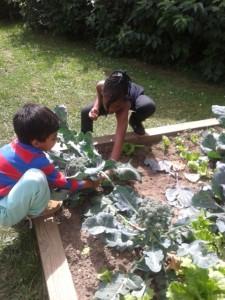 clapton pk gardening